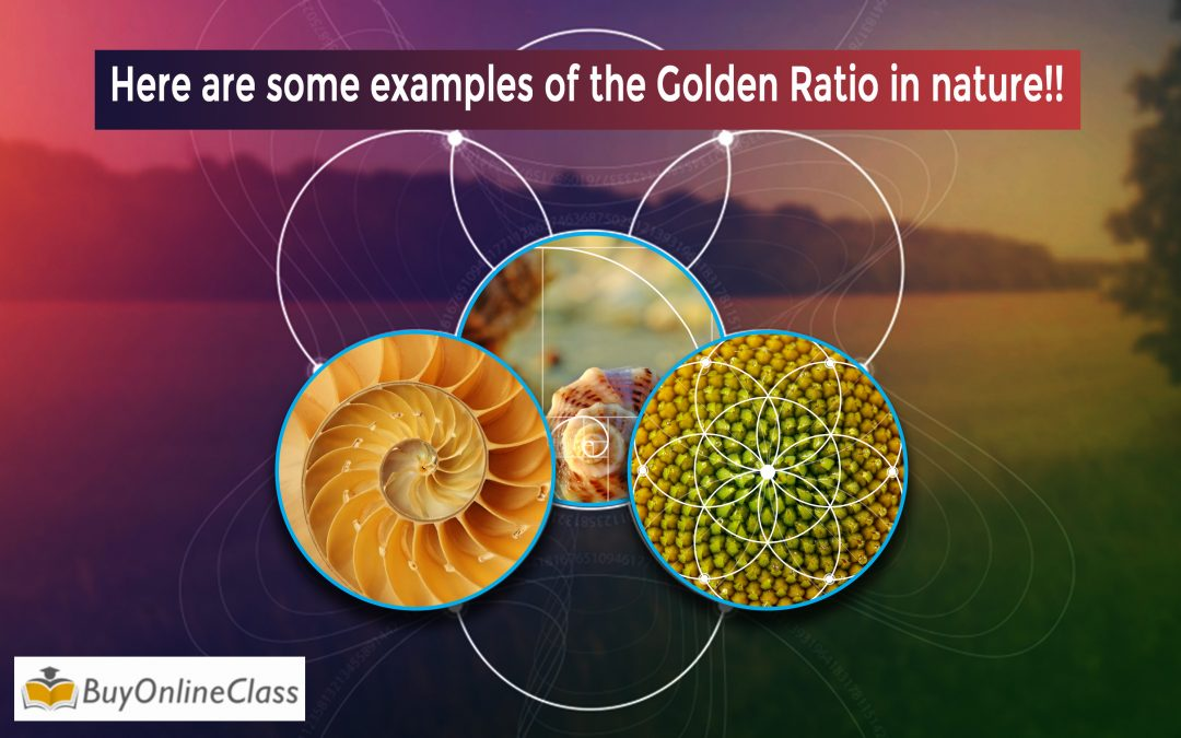 Here are some examples of the Golden Ratio in nature!!